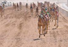 صورة شرم الشيخ تستعد لإقامة فعاليات المهرجان الأول لسباقات الهجن