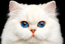 صورة دراسة حديثة: القطط ليست أقل وفاءً من الكلاب