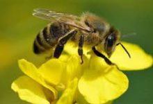 صورة النحل يعالج ارتفاع ضغط الدم.. تعرف علي التفاصيل
