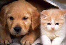 صورة تعرف على حكم تربية الكلاب في المنزل.. الإفتاء تجيب